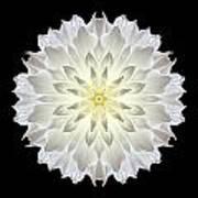 Giant White Dahlia Flower Mandala Art Print by David J Bookbinder