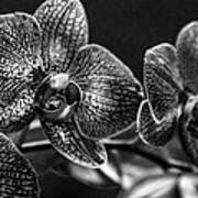 Gift Of Flowers Art Print
