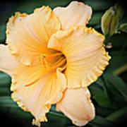 Gild The Lily Art Print