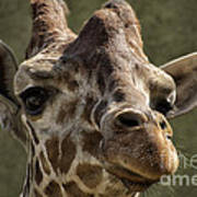 Giraffe Hey Are You Looking At Me Art Print