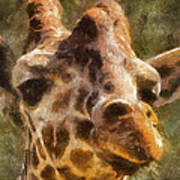 Giraffe Photo Art 01 Art Print