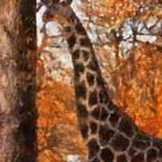 Giraffe Photo Art 03 Art Print