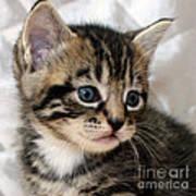 Gizmo The Kitten Art Print
