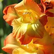 Gladiolus Named Halloween Art Print