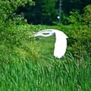 Gliding Egret Art Print