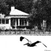 The Gliding Pelican Art Print