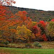 Glorious Fall Leaves Art Print