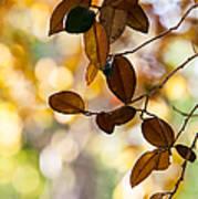 Glorious Foliage. Tree In Pamplemousse Garden 1. Mauritus Art Print