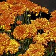 Glorious Golden Mums Art Print