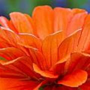 Glorious Orange  Art Print