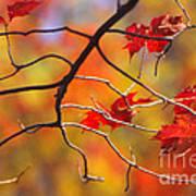 Glory Of Fall Art Print
