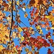 Glowing Autumn Art Print