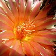 Glowing Cactus Flower Art Print