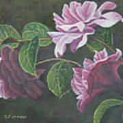 Glowing Camellias Art Print
