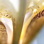 Glowing Details. Macro Iris Series Art Print