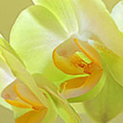 Glowing Orchid - Lemon And Lime Art Print