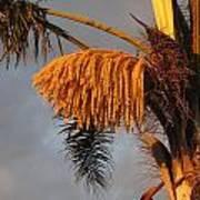 Glowing Palm Blossoms Art Print