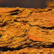 Glowing Pine Bark Art Print