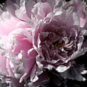 Glowing Pink Peony Art Print