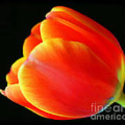 Glowing Tulip Art Print