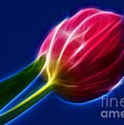 Glowing Tulip Art Print