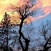 Gnarled Tree Silhouette Art Print