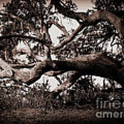Gnarly Limbs At The Ashley River In Charleston Art Print