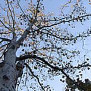 Go Climb A Tree Art Print