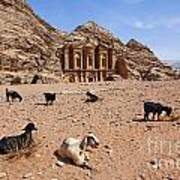 Goats In Front Of The Monastery At Petra In Jordan Art Print