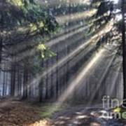 God Beams - Coniferous Forest In Fog Art Print