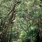 God's Canopy Art Print