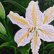 Gold Band Lily Art Print