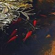 Gold Fish Swimming Art Print