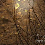 Golden Autumn Abstract Sky Art Print