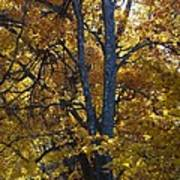 Golden Autumn Foliage At Palenville In October Art Print
