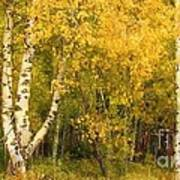 Golden Autumn Forest Mixed Media Painting Art Print
