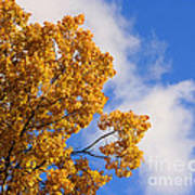 Golden Autumn Leaves And Blue Sky Art Print