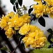 Golden Blooms One Art Print