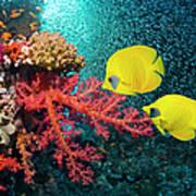 Georgette Douwma Premium-Poster Fahnenbarsche und Korallen