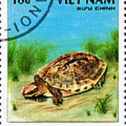 Golden Coin Turtle Cuora Trifa Art Print