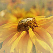 Golden Crown - Rudbeckia Flower Art Print