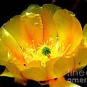 Golden Desert Flower Art Print