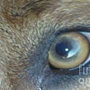Golden Eye Of Norbu 12 18 2011 Art Print