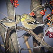 Golden Finch Cold Shoulder Art Print