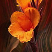 Golden Glow Canna Lily Art Print
