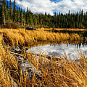 Golden Grass At Red Rocks Lake Art Print