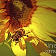 Golden Hoverfly 2 Art Print