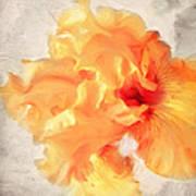 Golden Iris 2 Art Print