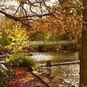 Golden Lake At Botanical Gardens Art Print