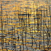 Golden Lake Ripples Art Print by James BO  Insogna